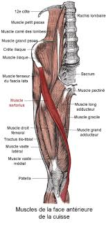 douleur interne au genou le forum des coureurs