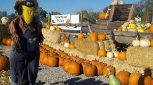 Pumpkin Patch Near Green Bay Wi by 10 Great Pumpkin Patches In Nevada
