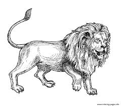 Adult Africa Lion Coloring Pages Print Download