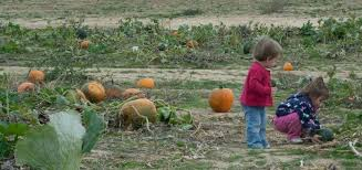 Noblesville Pumpkin Patch by Indy With Kids
