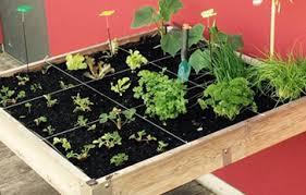mit indoor beeten im winter den home garden bereichern