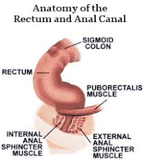 Pelvic Floor Dysfunction Symptoms Constipation by Rectum And Canal Anatomy Article About Pelvic Floor