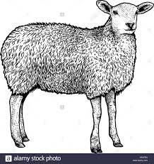 Couleur De Dessin De Mouton Ou De La Ram Cliparts Vectoriels Et