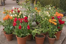 how many bulbs for that designing with fall planted bulbs