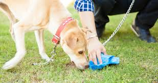 What Your Dog's Poop Tells You - Reading Dog Poop - Ready Pet Go Keep Odors Locked Inside With The Poovault Best 25 Dog Run Yard Ideas On Pinterest Backyard Potty Wichita Kansas Pooper Scooper Dog Poop Cleanup Pet Pooper Scoop Scooper Service Waste Removal Doodycalls Doodyfree Removalpooper 718dogpoop Outdoor Poop Garbage Can This Is Where The Goes 10 Tips To Remove Angies List Top Scoopers Reviewed In 2017 Backyards Wonderful 1000 Ideas About Backyard Basketball Court Station Bag Dispenser I Could Totally Diy This For A