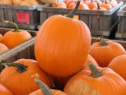 Types Of Pumpkins And Squash by Food Preservation Chow Line