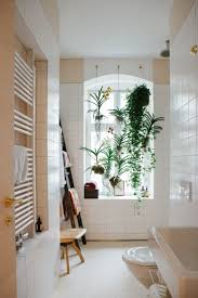 Plants For Bathrooms With No Light by Plants For Bathroom With No Windows Where Should I Put My Orchid