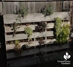 Pallet Succulent Vertical Garden Central Texas Gardener
