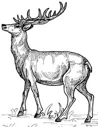 Coloring Page Deer Animals 35