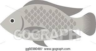 Vector Tilapia Flat Design