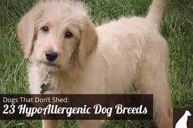 No Shedding Dog Breed by All Dog Breeds All Dog Types All Dog List Names U0026 Pictures