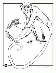 Wild Monkey Coloring Page