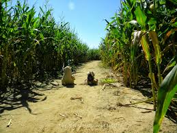 Patterson Farm Pumpkin Patch Ohio by Fall Festivals And Corn Mazes Sponsored The Reinvention Of Jessica
