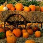 Hillcrest Farms Pumpkin Patch by Hillcrest Farm Cornmazes Outdoorswithkids Fall Pinterest