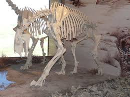 agate fossil beds updates from the paleontology lab
