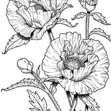 300x300 Poppy Coloring Pages Awesome Drawing Of California