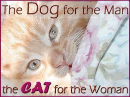 cat quotes cat quotes the for the the cat for the