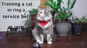 service cats clicker a cat to ring a service bell