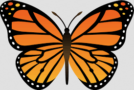 Simple Monarch Butterfly Coloring Pages