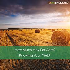 How Much Hay Per Acre? (Dec, 2017) Knowing Your Yield Bring The Farm To Your Backyard Innovation Smithsonian Guide Growing Rice Southern Exposure Seed Exchange Simple Vegetable Garden Monoculture Farming Has Been Taking A Toll On Farm Soil Hemp With Cabbage In Burgundy In Our A Weekend Willamette Valley 5 Cash Crops You Can Grow Gtblog Cowpea Annual Crop Stock Photo Picture And Plant And Manage Cover For Maximum Weed Suppression Extension Greenhouse Ftilizer Plants Flowers Landscaping Frontyard Three Things Very Dull Indeed Corn Backyard 2016 Weeks