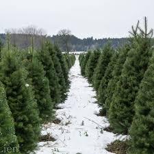 Krinner Christmas Tree Genie Xxl Canada by Christmas U2013 Wishing My Life Away