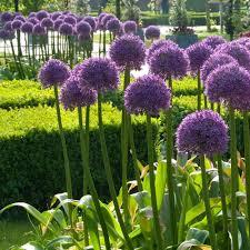 globemaster longfield gardens
