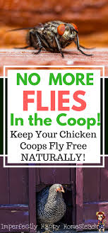 No More Flies In The Coop! Keep Your Chicken Coops Fly Free ... Why Should You Compost Chicken Manure Is Naturally High In 1105 Best Backyard Project Images On Pinterest Raising Baby Chick Playground Coops Pet Chickens And Worming Backyard Controversial Here Are Tips How To Naturally Treat Coccidiosis Your Chickens Natural Treatment Of Vent Prolapse Ducks 61 To Me Raising Means Addressing Healthkeeping Deworming Homesteads