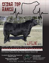 May 2016 Gelbvieh World By American Gelbvieh Association - Issuu Davidson Jackpot 74z Salebook Bull Barn Saler Semen Competive Edge Genetics Abs Global Inc Bovine Reproduction Services And December 2011 Horizons By Genex Cooperative Issuu Lookout Mountain Llc Home Facebook Znt Cattle Co 2012 44 Arsenal 4w07 Kittle Farms Hart Star 35y43 For Sale 2014