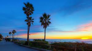 California Beaches Palm Trees