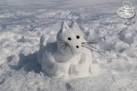 snow cat that cat s cool introducing snow cat with dogs and cats