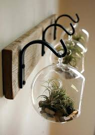 Air Plant Wall Art Glass Globe Decor Mounted To Recycled By More A Diy