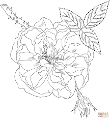 Lancasters Rose Coloring Page Free Printable
