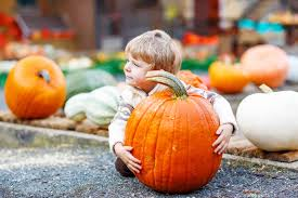 Pumpkin Patch Denver Botanic Gardens by Corn Mazes And Pumpkin Patches 2017 Mile High On The Cheap