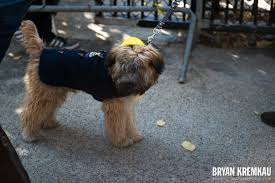 Tompkins Square Park Halloween Dog Parade 2017 by Tompkins Square Halloween Dog Parade 2013 Tompkins Square Park
