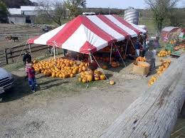 Highwood Pumpkin Festival North Of Chicago Il 25 000 Jack O by 48 Best Chicago Images On Pinterest