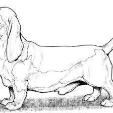 Dog Color Pages Printable Coloring Free And
