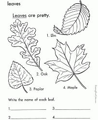 2017 Coloring Pages Of Leaves Free Printables About 1000 Images Colouring