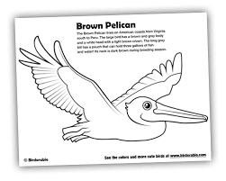 Birdorable Coloring Page Brown Pelican
