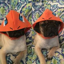 Libbys Pure Pumpkin For Dogs by Charmander Pokemon Dog Costume Etsy Made To Order