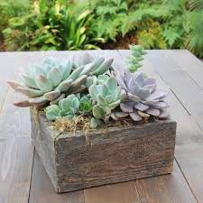 succulents in reclaimed wood planter succulent for the office