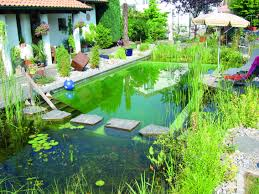 Natural Pool. Stepping Stones Divide Bio-zone From Swimming Pool ... Beautiful Backyard Ponds And Water Garden Ideas Pond Designs That 150814backyardtwo022webjpg Decorating Pictures Hgtv 13 Inspirational Garden Society Hosts Tour Of Wacos Backyard Ponds Natural Swimming Pools With Some Plants And Patio Design In Ground Goodall Spas Small Pool Hgtvs Modern House Homemade Can Add The Beauty Biotop From Koi To Living Photo Home Decor Room Stunning Landscaping