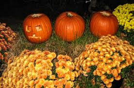 Lakeview Pumpkin Patch by Fun Things To Do In The Fall In The Triangle