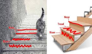 cat stairs the cat is going the stairs business insider