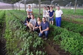 chambre agriculture des landes la chambre d agriculture des landes à la découverte du ginseng