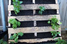 How To Make A Vertical Pallet Vegetable Herb Garden