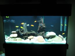 Aquarium Substrate: Buy Aquarium Substrate Online At Best Prices ... Httpwwwaquariuesigngroupcomdataphotos Low Tech Tank Showandtell Low Tech Can Be Lush Too The Aquascaping Styles Aquariums Planted Aquarium And Fish Tanks 101 Best Small Size Images On Pinterest Aquarium Nature Style Aquascape Awards Best Substrate For Betta 268993 Concave Convex Triangular Rectangular Aquascapes Aquascapers With Plastic Plants Only _ Ideas 106 Fluval Edge Inspiration Ohko Stone Forum Art Theories Tips Keeping Basics Love