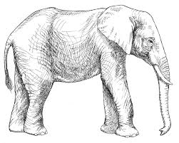 Elephant Coloring Page For Kids Id Uncategorized