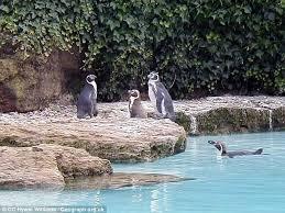 chessington world of adventures fox kills eight penguins daily
