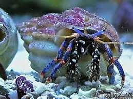 Halloween Hermit Crab Care by Hermit Crab Pet Supplies Ebay