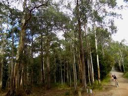 100 Lerderderg State Park Life In Australia Parks Visit